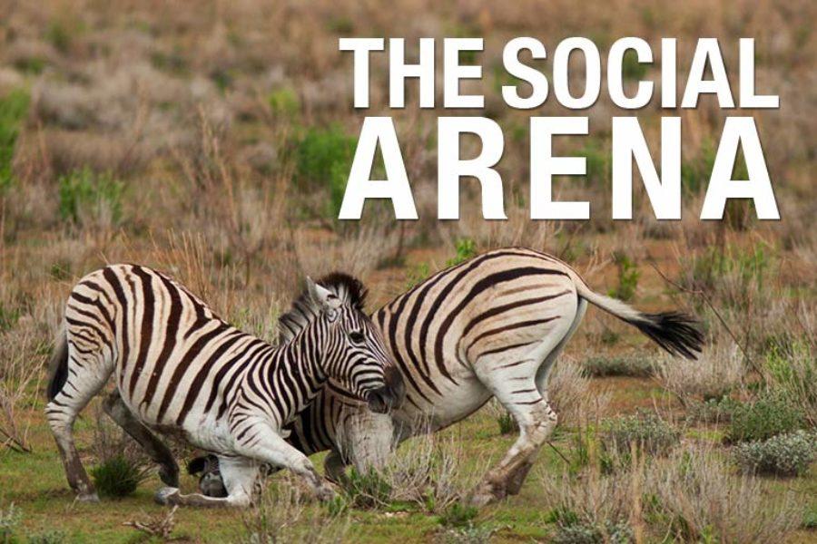 I social media e il mondo del calcio: 2 case history