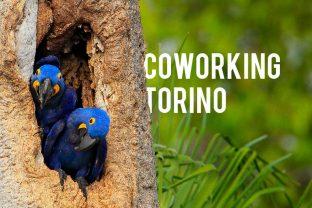 Torino: la lista di coworking e incubatori