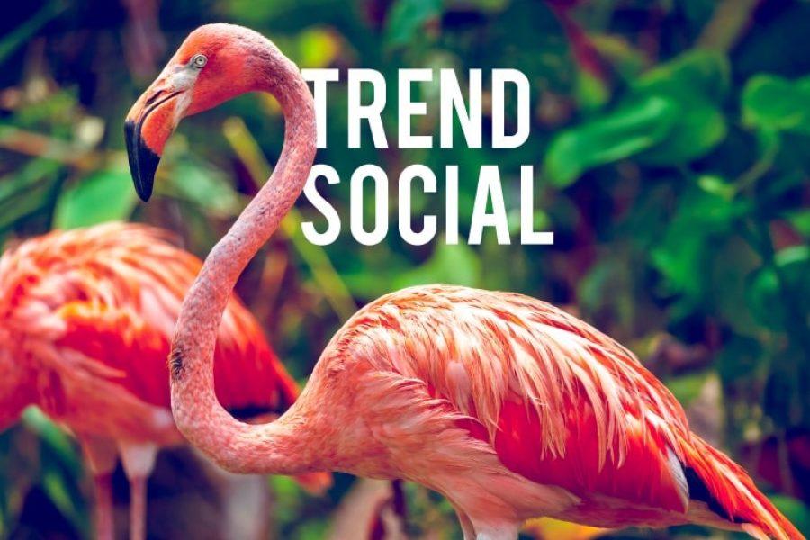5 trend social da non sottovalutare