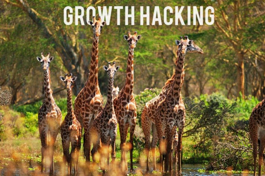 Growth Hacking Day: il nostro racconto