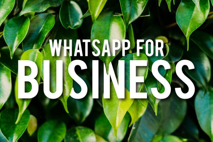 WhatsApp Business: tutto quello che devi sapere!
